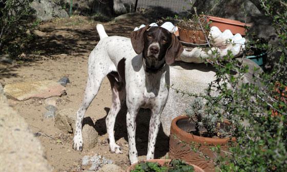 Pet Sitting, Dog Walking, Pet Care