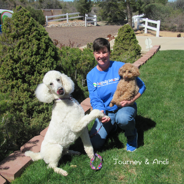 Pet Sitting, Dog Walking, Pet Care